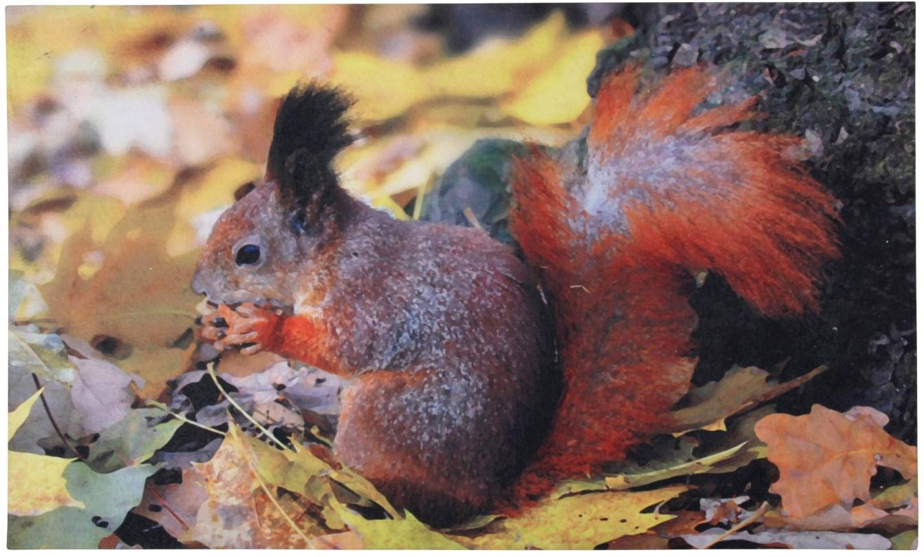 Doormat 'Squirrel'