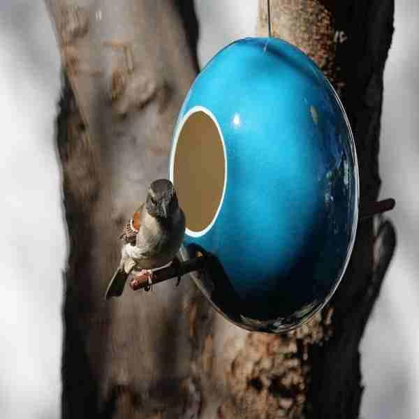 Bird Feeder Ostrich Egg Blue