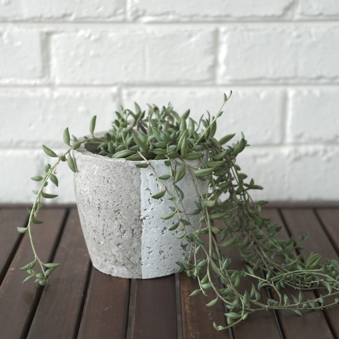 Cement-look with white plant pot