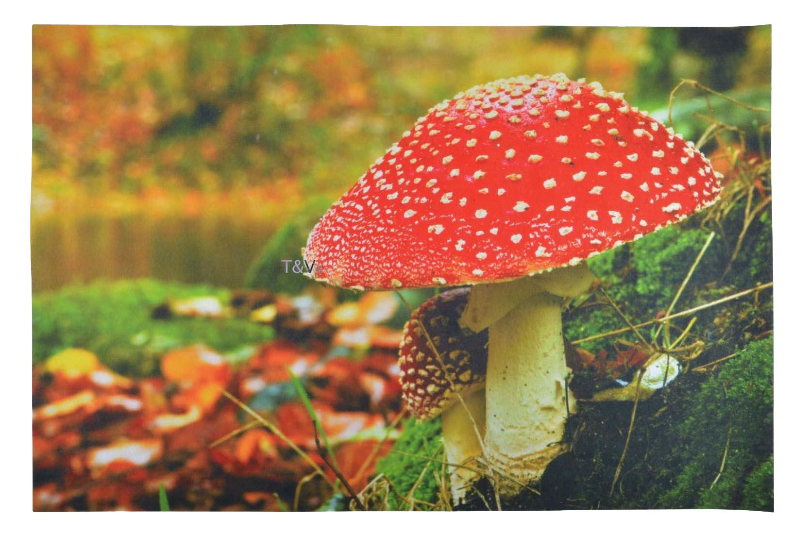 Doormat 'Mushroom'