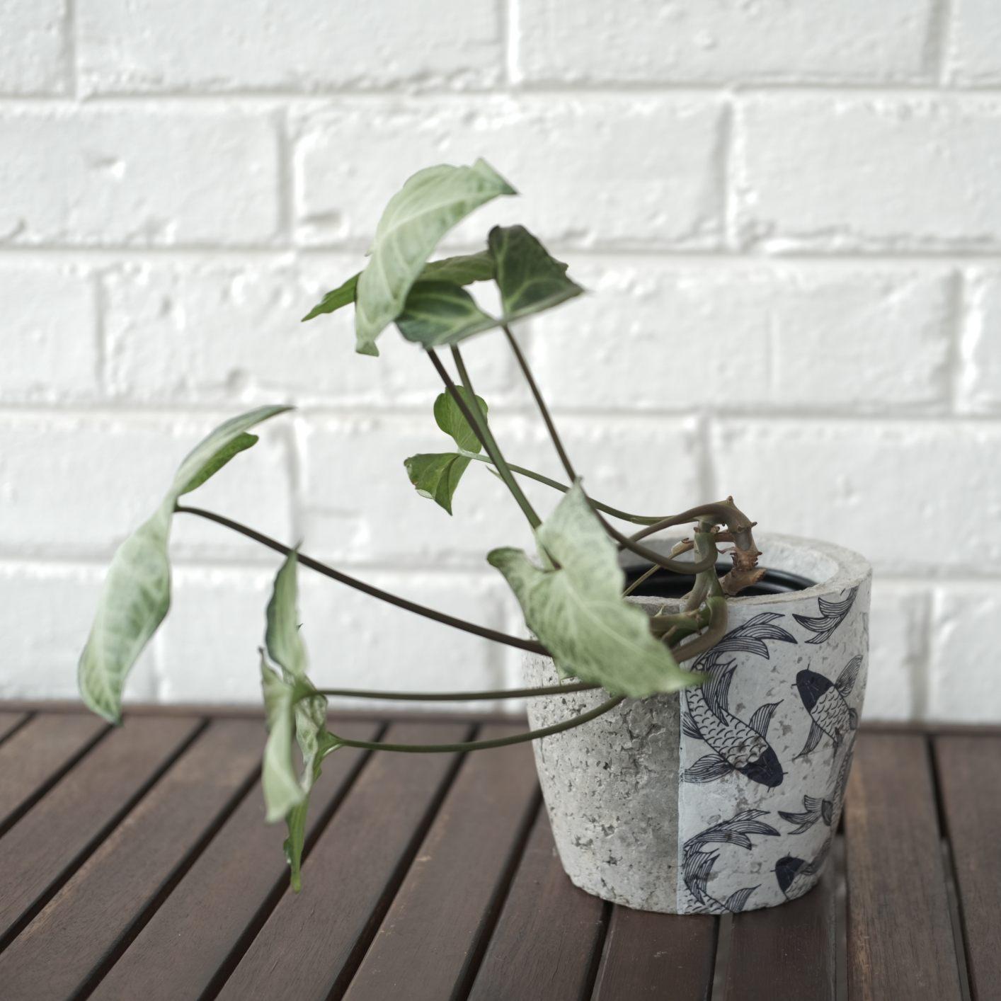 Koi fish plant pot