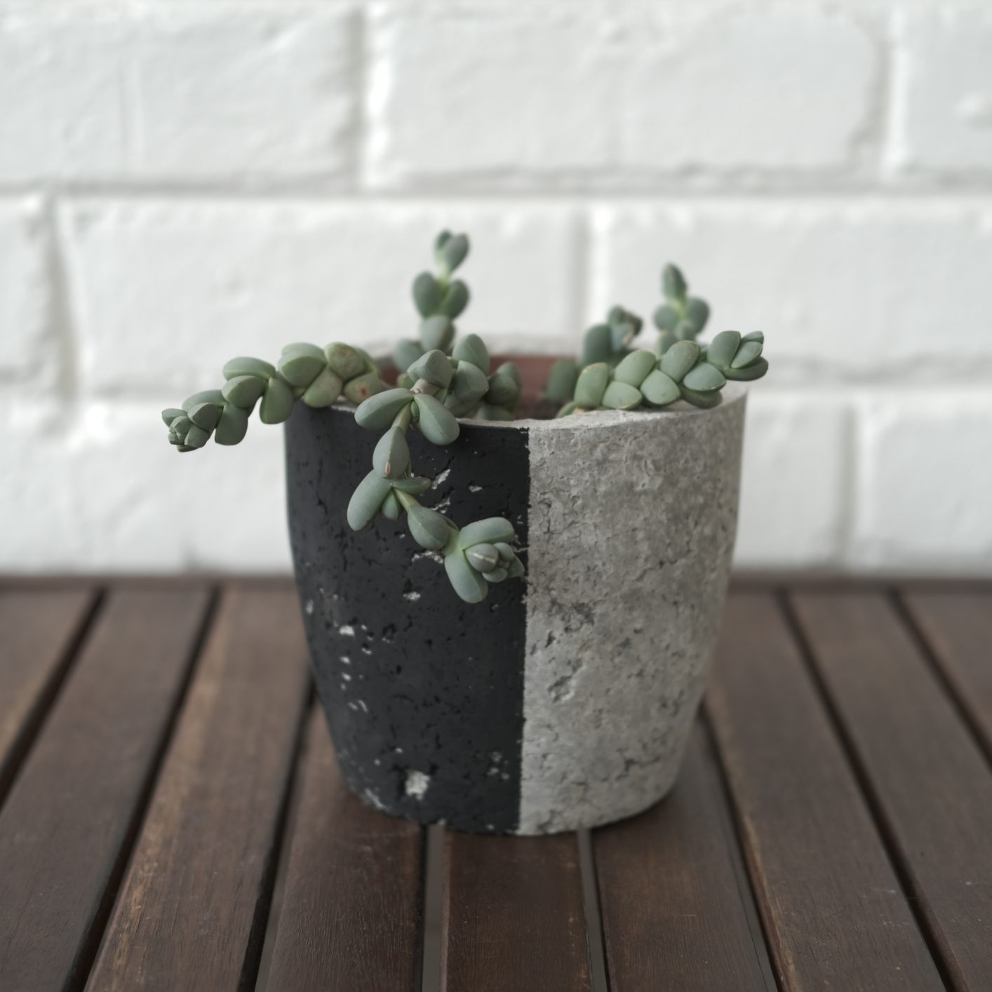 Cement-look with black plant pot