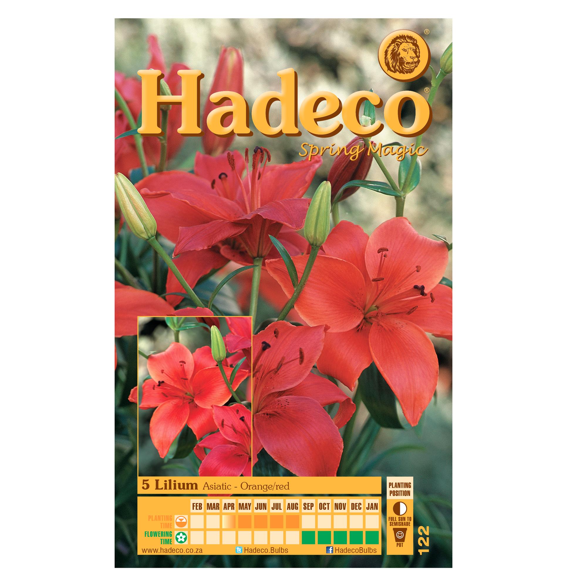 Lilium Asiatic -  Orange/Red - 2 x 5 Bulbs