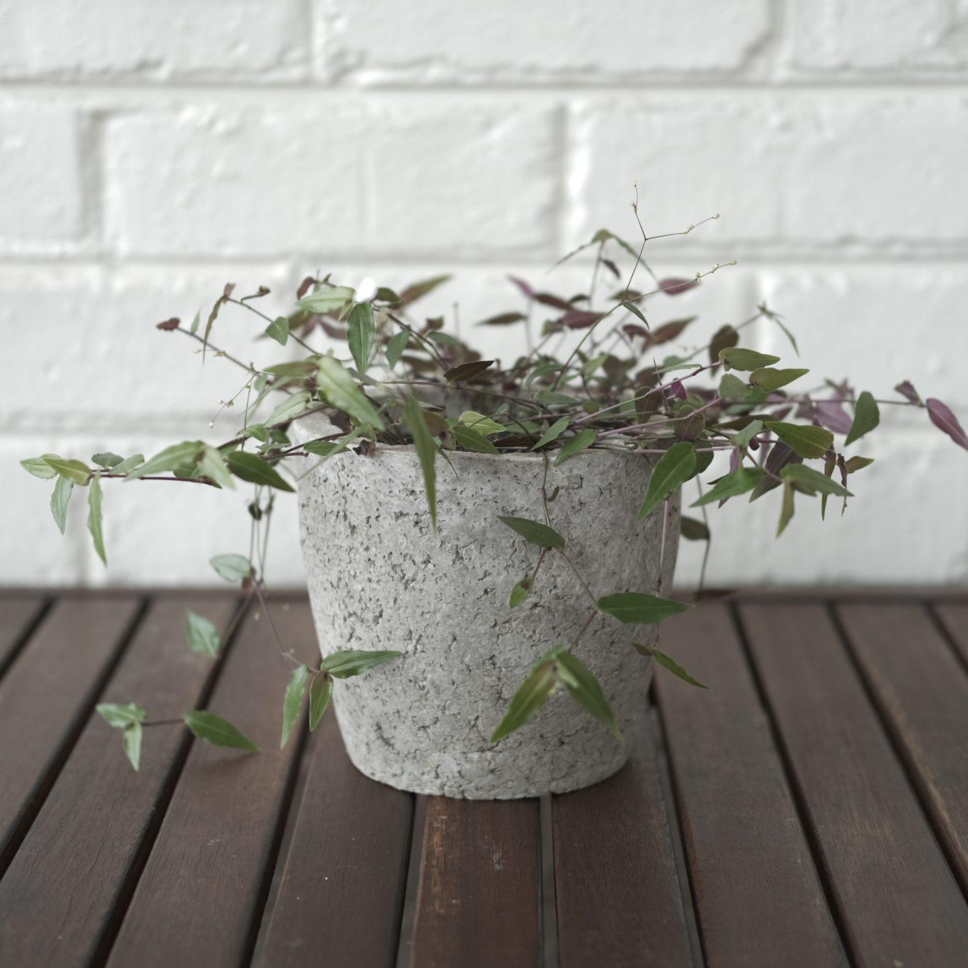 Cement-look plant pot
