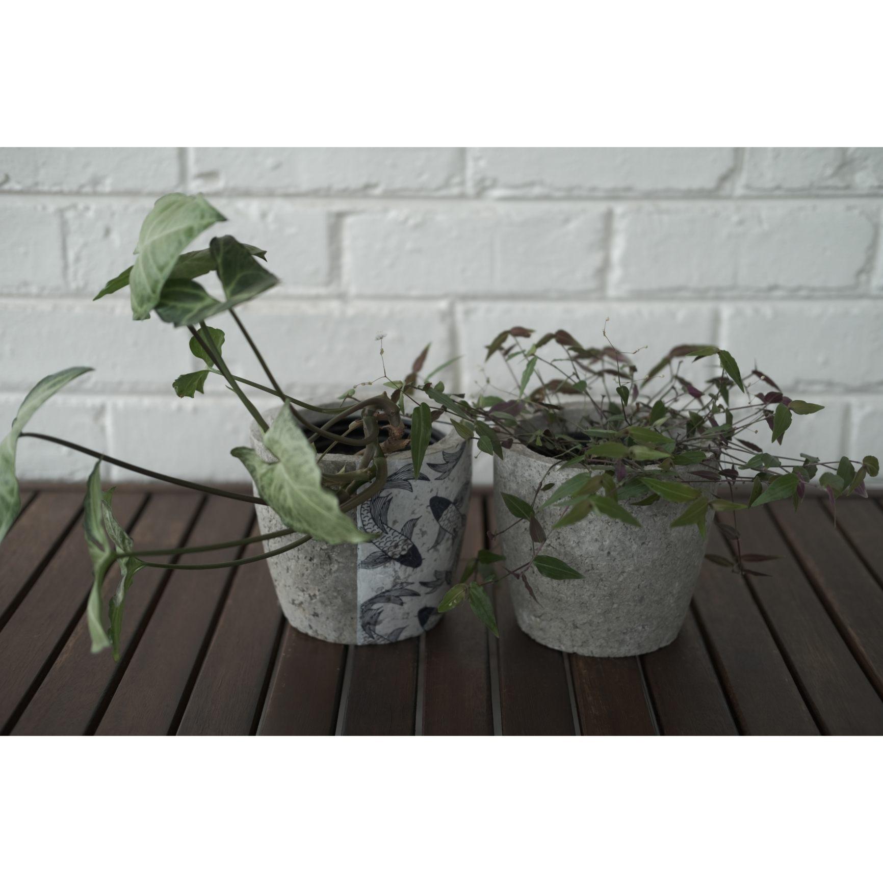 Plant pot set with Koi design